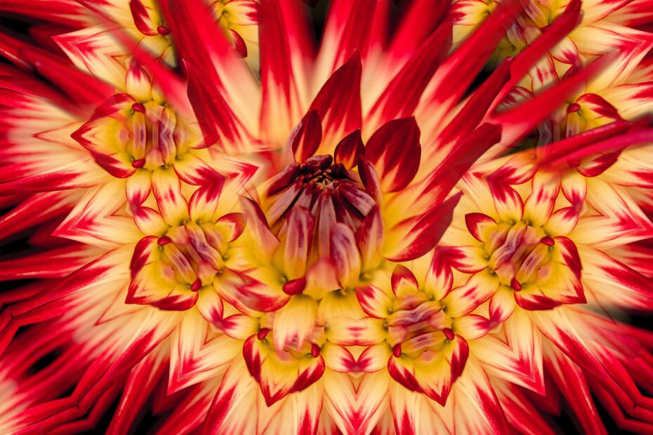 "Trippy flower, fire flower."" byTai Pfeifer on Unsplash"
